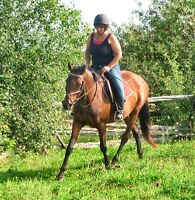 GORGEOUS PROFESSIONALLY TRAINED REG. THOROUGHBRED MARE FOR SALE