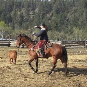 11yr old bay ranch/rope horse