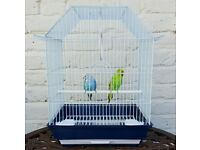Pair Of Budgies with BRAND NEW Cage