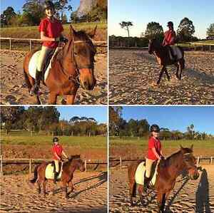 'Chasing mavricks' project pony Montville Maroochydore Area Preview