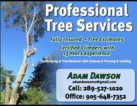We will beat any reputable tree company's quotes by 10%