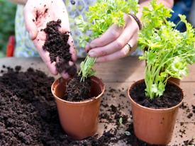 Organic Herb Plants 🌿🌱