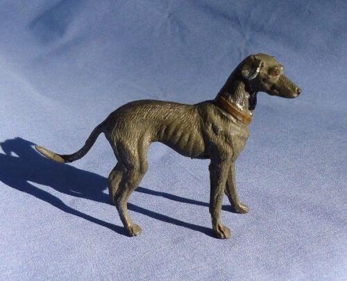WHIPPET ITALIAN GREYHOUND dog Heyde Germany