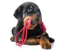 Dressage chien - cours d'obéissance - comportement Canin