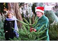 FUN, OUTDOOR WORK SELLING CHRISTMAS TREES - £9 - £11.50/h