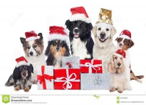 Discount Doggy - Small Only $40, Full Grooming, Tx, Inc.