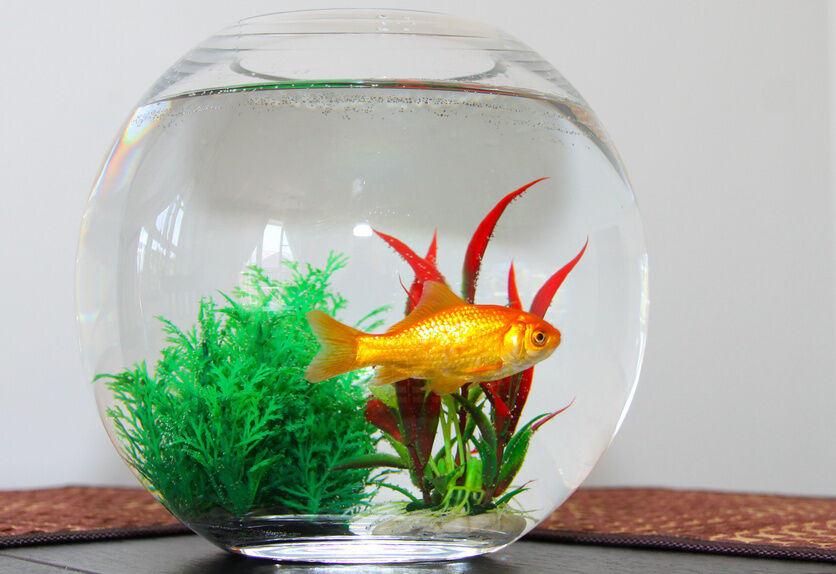 How to clean a goldfish bowl ebay for How to make a fish bowl