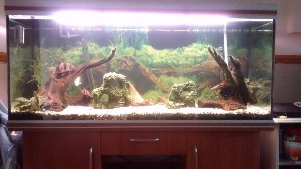 Rena 5ft tropical fish tank comes with two large bog wood for Fake artificial aquarium fish tank