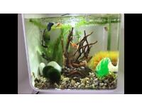Biorb flow 30 fish tank and loads of accessories