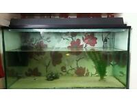 Large fish tank including 20 fish