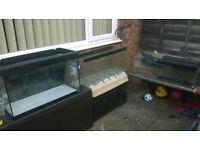 3 large fish tanks