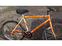 ADULT MOUNTAIN BIKE HAS 21 IN FRAME 26 IN WHEELS new tires fitted