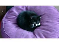 2 wee kittens - cuddly, playful and beautiful (1 tortioseshell girl and 1 Black n White boy) 80 each