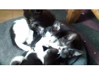 Kitten furballs
