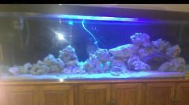 Large freshwater /tropical aquarium