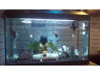 Fish tank tropical and fish