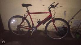 raliegh bike adults