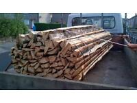 Tree cuttings / decorative timber 9ft ,