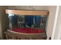 3ft bow front fish tank
