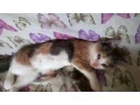 15 week old kitten for sale