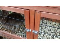 beautifull male rabbit & double hutch
