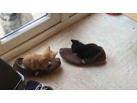 Kittens boys 2 left