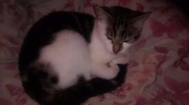 Cute and lovely kitten for sale 5 months old