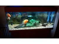 Fish Tank Juwel Rio (reduced in price)