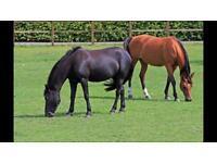 Field for horses - Castle Donington near Derby