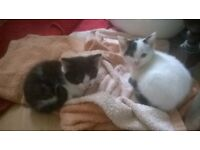 2 kittens ... loving homes wanted
