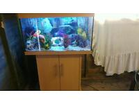 """32"""" JEWEL RIO 125 LITRE FISHTANK WITH BEECHWOOD CABINET IN EXCELLENT CONDITION"""