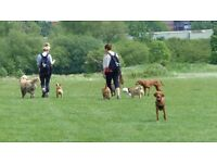 Devoted dog walkers looking for furbabies to join our family