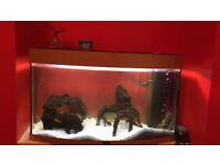 Juwel Bow Front Aquarium