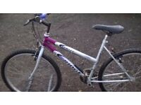 LADIES ADULT MOUNTAIN BIKE IN NEW CONDITION suit 5.3 to 5 . 10 ft tall 26 in wheels