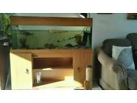 4 ft tank and map turtle