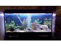 160 litre aquarium