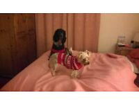 Reliable Dog Carer Urgently required for 2 small, female dogs