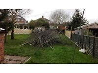 """LOAD OF TREE BRANCHES, COULD BE USED FOR FIRE WOOD FIREWOOD, FREE TO ANYONE THAT COLLECTS 1"""" - 8"""""""
