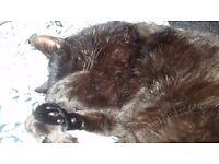 Ipswich Pet Sitting - cats, hamsters, gerbils, rabbits, rats
