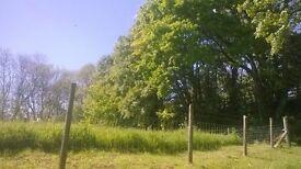 Garden/Grounds maintenance/Tree work.