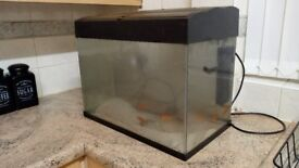 X4 gold fish and set up