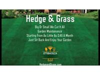 Hedge & Grass Garden maintenance First month half price for new customers!!!!!!
