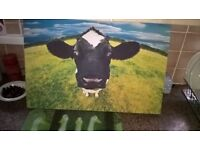 A NOSEY MOO COW PICTURE 24X16 INCHES