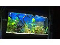 250 litre fish tank