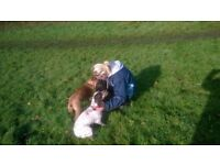 Animal Adventures: Dog Walking and Pet Care Service in Chesterfield and surrounding areas