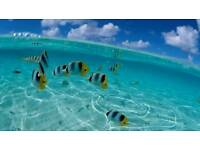 Ro water r.o Marine discus tropical fish window cleaner