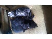 4 kittens,3 male, 1 female