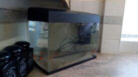 X4 gold fish and 2 foot tank