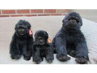 TY Beanie Gorilla Trio
