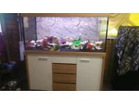 4.4FT EHEIM SCUBALINE FISHTANK IN WHITE AND WALNUT IN EXCELLENT CONDITION
